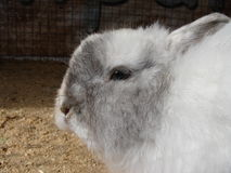 Cute white rabbit Royalty Free Stock Images