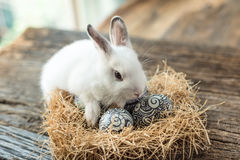Cute white rabbit with Easter egg Royalty Free Stock Images