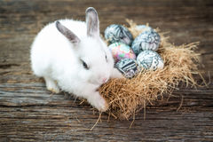 Cute white rabbit with Easter egg in nest Stock Photos