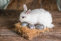 Cute white rabbit with Easter egg in nest Stock Images