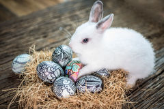 Cute white rabbit with Easter egg in nest Stock Image