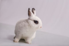 Cute White rabbit with eyeshadow Stock Photos