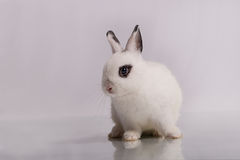 Cute White rabbit with eyeshadow Royalty Free Stock Photography