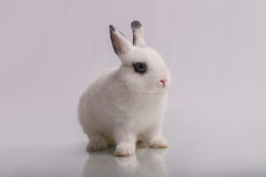 Cute White rabbit with eyeshadow Royalty Free Stock Photos