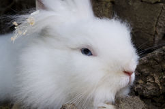 Cute white rabbit Royalty Free Stock Photos