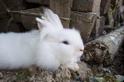Cute white rabbit Royalty Free Stock Image