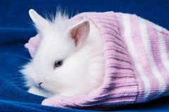 Cute white rabbit in a soft cap Royalty Free Stock Image