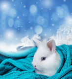 Cute white rabbit in a soft scarf Stock Image