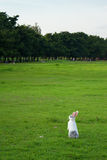 Cute White Rabbit standing on field royalty free stock images