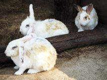 Cute White Rabbits at the City Zoo stock photo