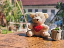 Cute white teddy bear and red heart love sitting. Near white pot on the wooden table with sunlight. Garden view on morning stock photos