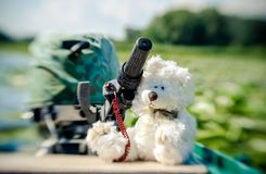 Cute white teddy bear runs a motor boat. Active summer holidays. Cute white teddy bear on summer vacation. Toy on board a promenade on the lake with water lilies royalty free stock photography