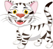 Cute white tiger cub Stock Images