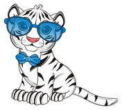 Cute white tiger sit Royalty Free Stock Photos