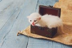 Cute white tiny Kitten in jewel box. Royalty Free Stock Photo