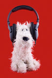 Cute white toy dog in headphones Royalty Free Stock Image