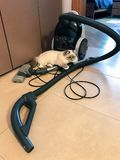 Cute white young cat lies on a vacuum cleaner in home interior in beige tone stock image