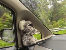 Cute wild Koala Bear doll sitting inside moving car near wing mi Stock Photos
