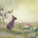 Cute Wild Rabbit Royalty Free Stock Images