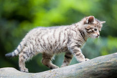 Cute wildcat baby stock photography
