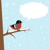 Cute winter bullfinch bird on a branch Royalty Free Stock Image