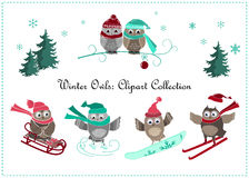Cute winter owls banner. Baby birds and sport Stock Photography