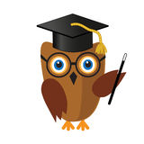 Cute wise owl in mortar board hat Royalty Free Stock Photo