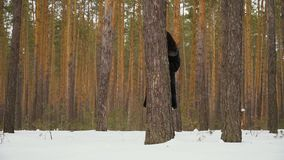 Cute woman peers out of the tree in winter forest. Slowmotion. Handsome woman peers out of the tree in the winter forest. Then pretty lady hides behind the tree stock video footage