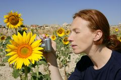 Cute woman photographer in nature sunflower field Stock Photos