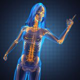 Cute woman radiography. Made in 3D graphics Stock Photo