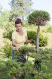 Cute Woman trimming bonsai tree Royalty Free Stock Photos