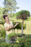 Cute Woman trimming bonsai tree Royalty Free Stock Images