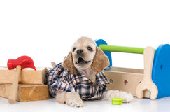 Cute working dog Stock Photography