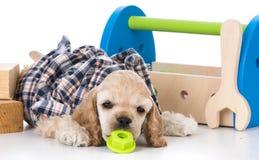 Cute working dog Stock Photo