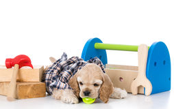Cute working dog Stock Images