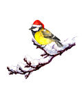 Cute Xmas blue tit in red Santa hat Royalty Free Stock Photography