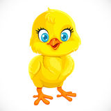 Cute yellow cartoon baby chicken Stock Photos