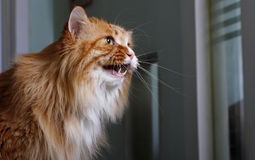 Cute yellow cat Stock Photo