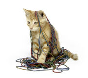Cute yellow cat with yarn Stock Image