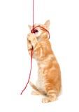 Cute yellow cat with yarn Stock Photo