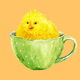 Cute yellow chick in a cup. Beautiful image with watercolor cute yellow chick in a cup Stock Images
