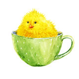 Cute yellow chick in a cup. Beautiful image with watercolor cute yellow chick in a cup Stock Image
