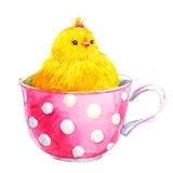 Cute yellow chick in a cup. Beautiful image with watercolor cute yellow chick in a cup Stock Photography