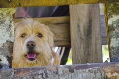 Cute yellow dog hiding under the table outdoors Royalty Free Stock Photos