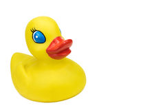 Cute Yellow Duck with copy space royalty free stock image