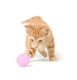 Cute yellow kitten playing with ball Royalty Free Stock Image