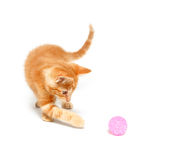 Cute yellow kitten playing with ball Stock Images