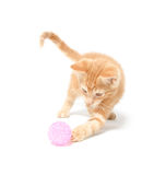 Cute yellow kitten playing with ball Royalty Free Stock Images