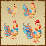 Cute yellow rooster with big blue tail Royalty Free Stock Photos