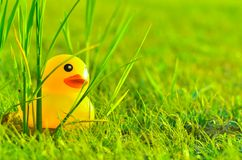 Cute yellow rubber duck on field of grass and sun in morning Royalty Free Stock Photography